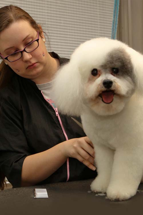 Pet Grooming at Madison Veterinary Hospital